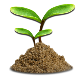 Seedling growing